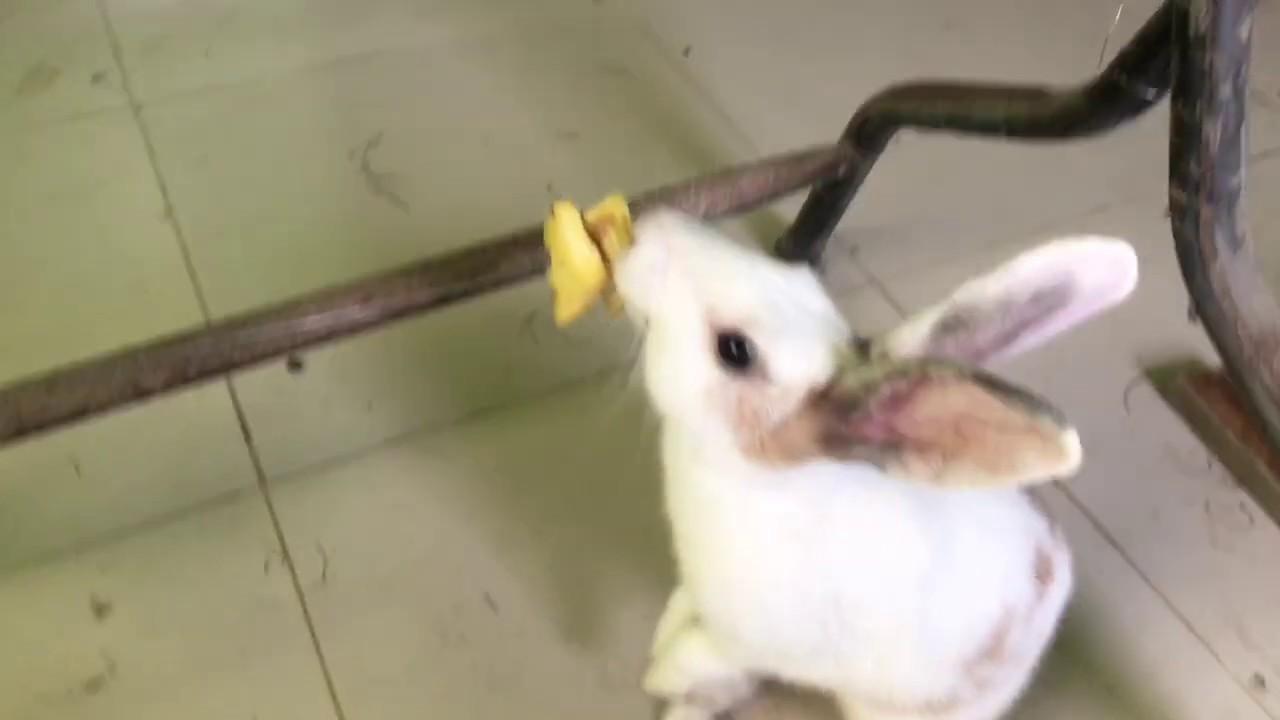 Rabbit Eating Pineapple Asmr   YouTube