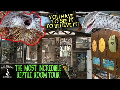 THE MOST INCREDIBLE REPTILE ROOM TOUR! (Camo's Reptiles, Australia)