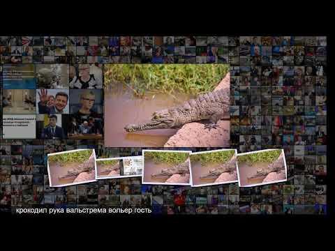 Крокодил советского космонавта набросился на пенсионера из Швеции Звери Из жизни