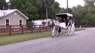 Video Natalie Ramos /Horse Carriage Ride (Labelle, Fl) download MP3, 3GP, MP4, WEBM, AVI, FLV Desember 2017