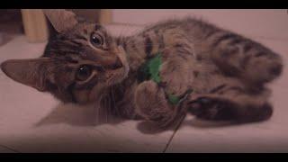 Frijis: Fancy Feast vs Friskies Wet Cat Food (ASMR)