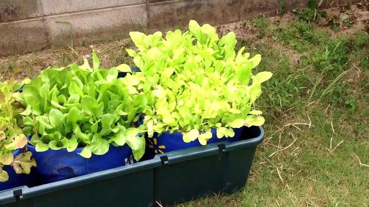 Update   Using Walmart Grow Bags With The Self Watering System Part 2    YouTube