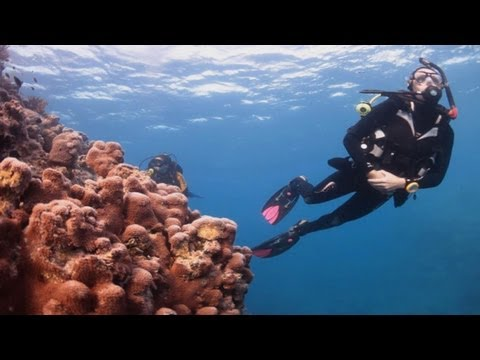 The Great Barrier Reef, Whitsundays, Queensland Australia with Wings Diving Adventures