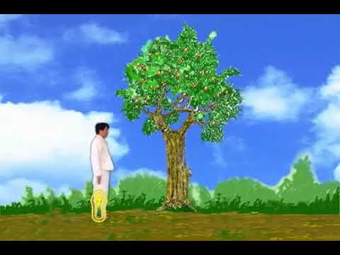 Cosmic Tree Healing Really Works Chi Kung