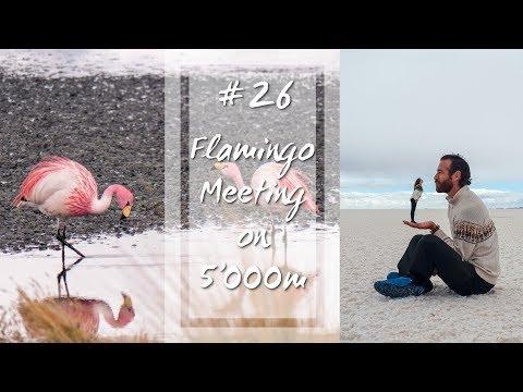 Meet the Flamingos on 5'000m | #26 Travel Guide, Bolivia