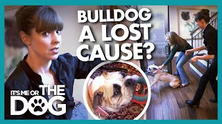 Mother Fears Aggressive Bulldog is a 'Lost Cause' and a DANGER to Kids | It's Me or The Dog