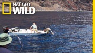 Dangerous Deployments | Wild Lab
