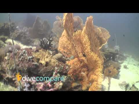Scuba Diving Koh Lipe, Thailand | Dive Compare