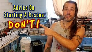 Don't Start A Guinea Pig Rescue!