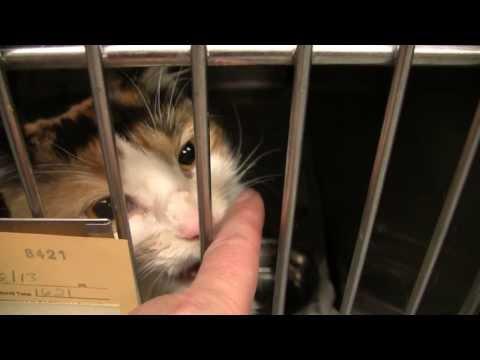 P.U.P.S. Cat Room Video 8/14/13