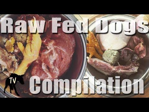 ASMR 2 hours of Dog Eating Raw Food Mukbang Compilation