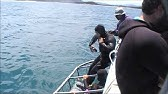 d1c2093b63fd45 PADI promotie film Lucky Dive Center Rotterdam - YouTube