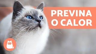 Como saber se um GATO está com CALOR? 🐱☀️ + Como prevenir