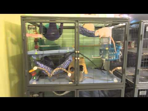 Pet Mice Cage Tour