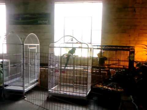 Our visit to Atlantis Pet Shop, Terre Haute, Indiana