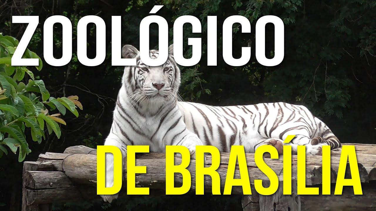 Resultado de imagem para FOTOS DE BRASILIA ZOOLOGICO