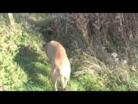 Walk in Sonning-on-Thames October 28th 2014