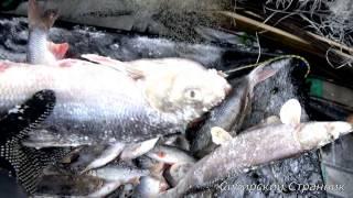 Рыбалка на подъёмник(паук) и раколовки, а также подарки от компании Арктика