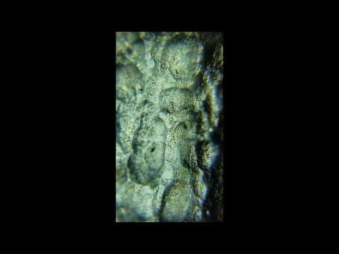 Moldavite | Inside & Out Under A Microscope