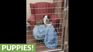 Community donates sofas for homeless pups