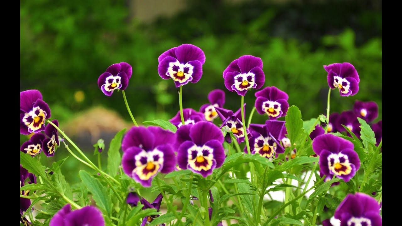 Вальс Цветов Очень Красивые Цветы - YouTube