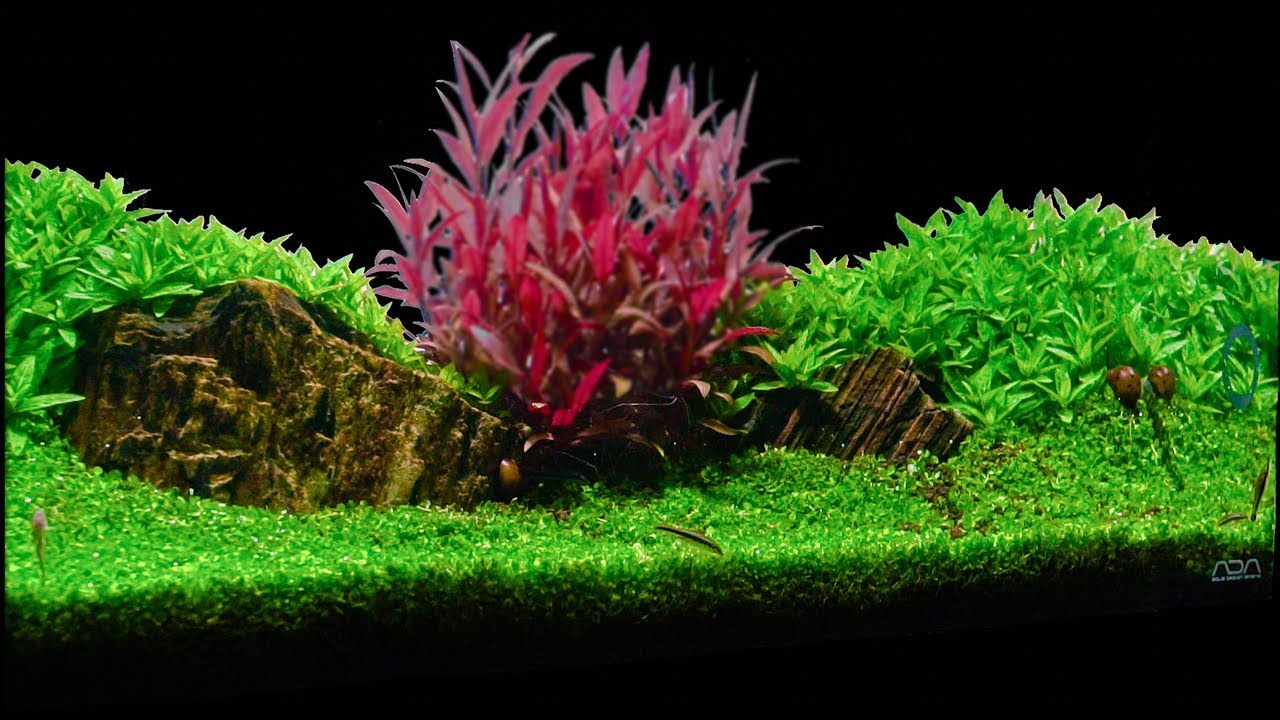 Aquarium   Carpet plant trimming   Monte Carlo - YouTube