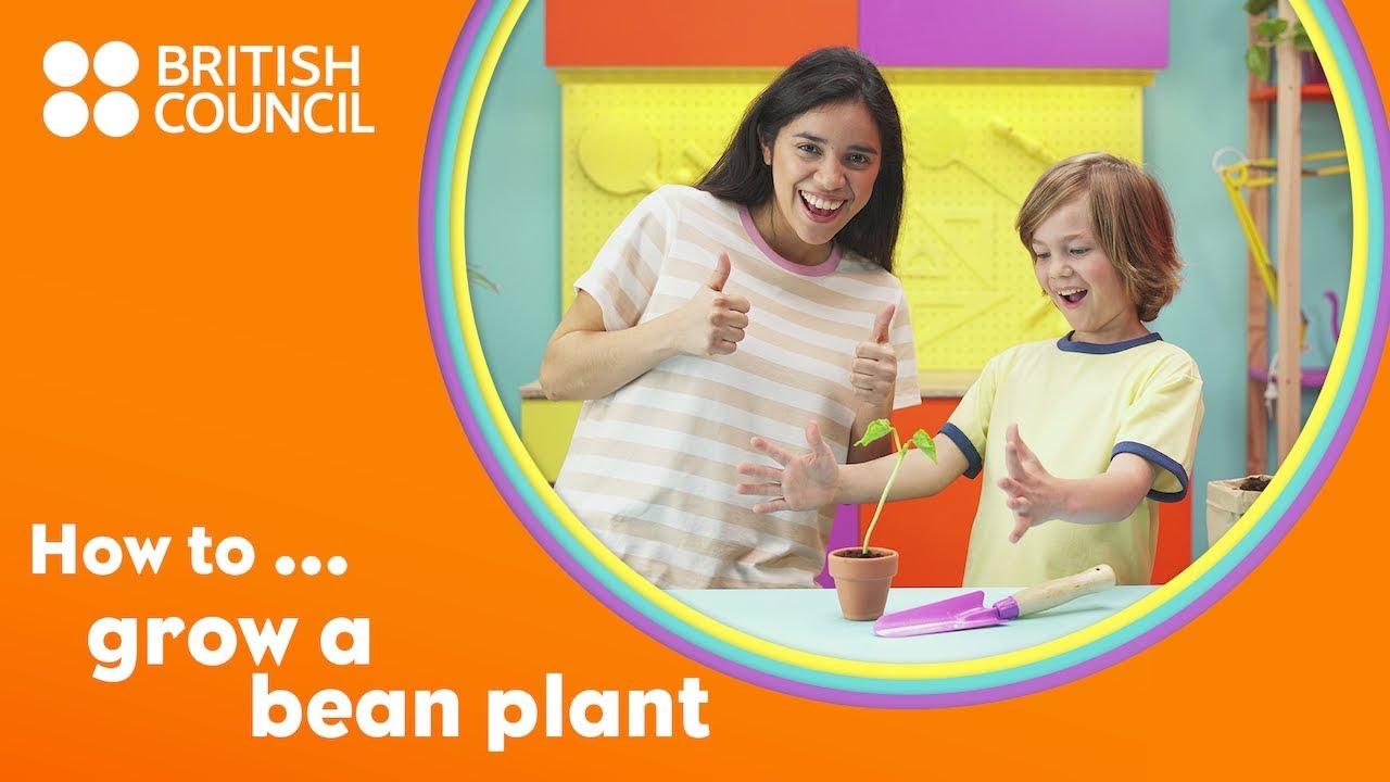 How to grow a bean plant