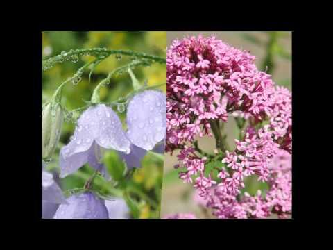 Garden Photography by Anna van de Braak