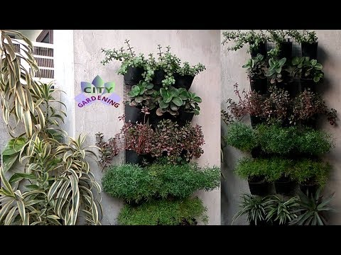 Make a vertical garden and decorate your walls with plants