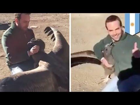 Burung Kondor memeluk pria yang menyelamatkan hidupnya - Tomonews