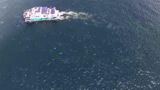 Die Kamera fliegt über den Ozean. Als sie ins Wasser zoomt, bleibt mir der Mund offen stehen!