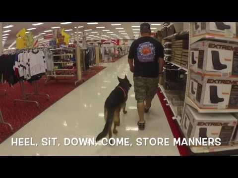 "11 Month Old German Shepherd ""Skully"" | Port Saint Lucie Dog Trainer | Obedience | Off Leash K9"