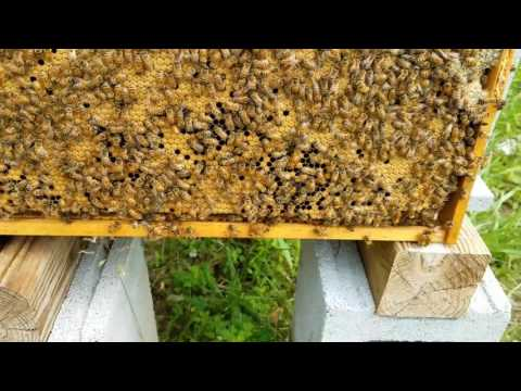 How To Prevent Your Hive From Swarming With These Signs