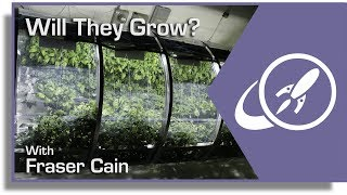 Q&A 36: Growing Plants in Lunar Regolith? And More