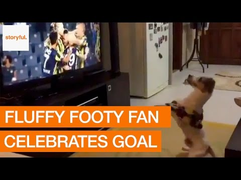 Dog Kitted Out in Soccer Team's Colors Adorably Celebrates Goal
