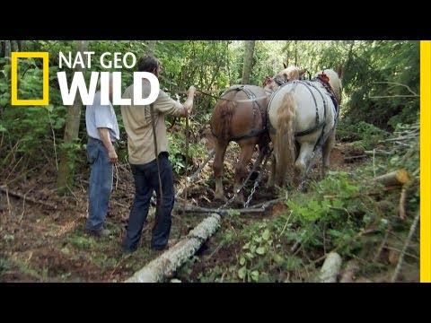 Horse Logging  Jobs That Bite