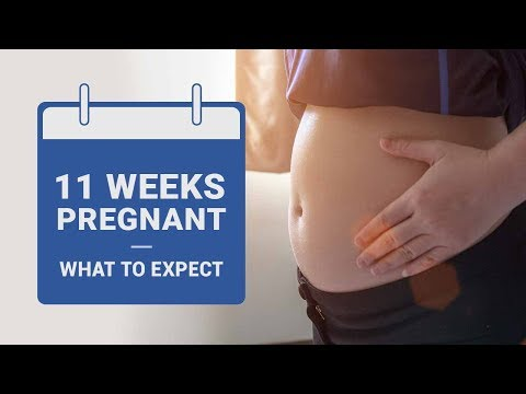 11 Weeks Pregnant   What to Expect