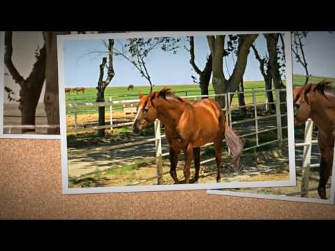 California Chrome: Lucky Pulpit-My Father in Me