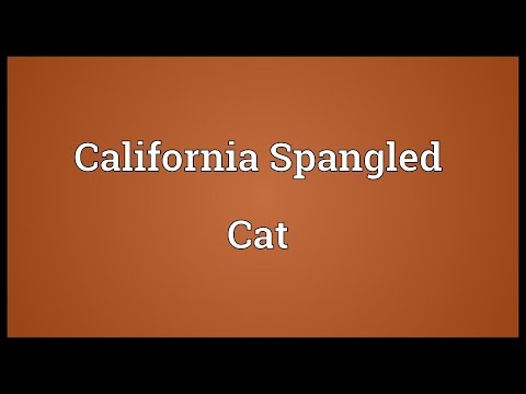 California Spangled Cat Meaning