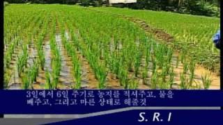 System of Rice Intensification SRI Hangul Korean Pt2