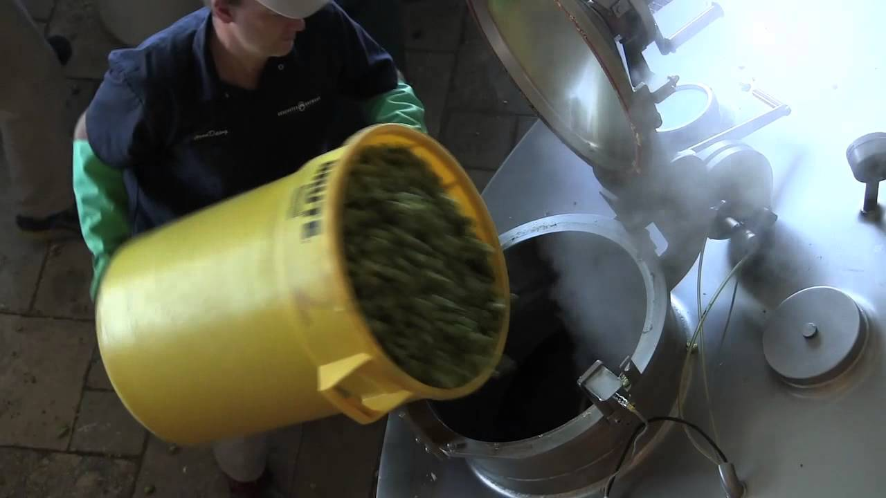 Fresh hops at Central Oregon breweries