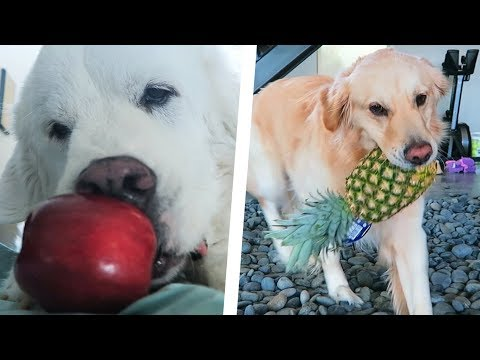 DOGS TRY FRUITS FOR THE FIRST TIME - SCS #198