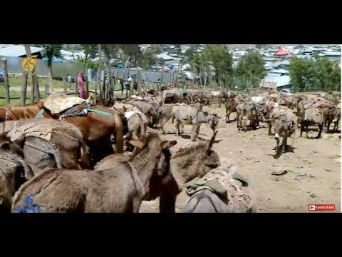 Donkey Parking Service In Debre Berhan
