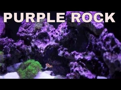 coralline algae - purple stuff on rocks in saltwater aquarium