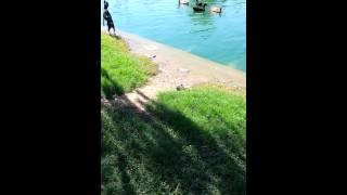 Min Pin Goes Duck Hunting