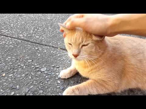 Happy Orange Cat Gets Petted