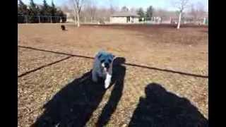 Woukei - Zack Pugapoo Running In Slow Motion - Samsung Galaxy Note2