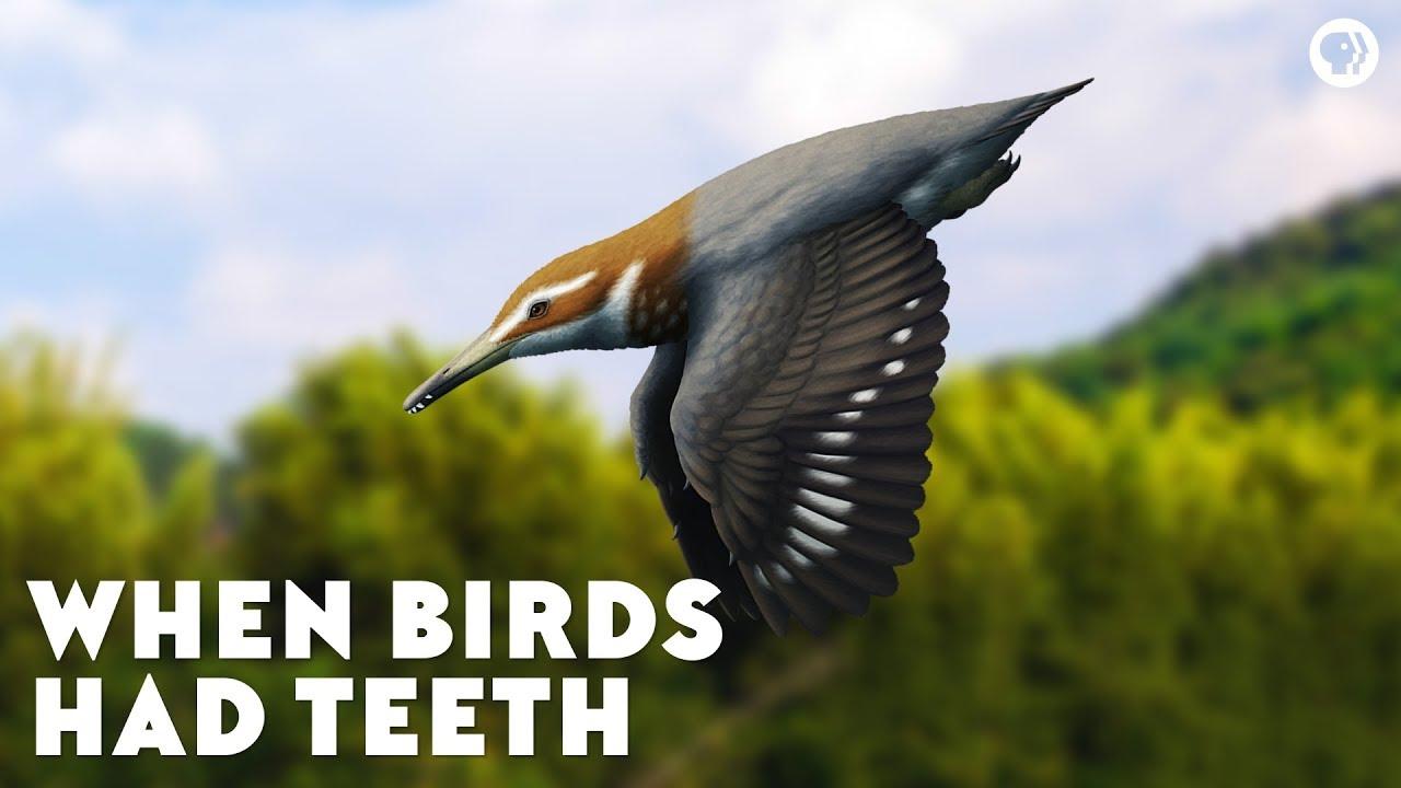 when-birds-had-teeth