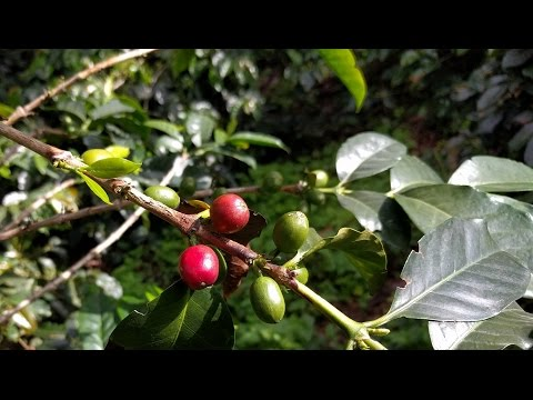 Colombia - Coffee Farm