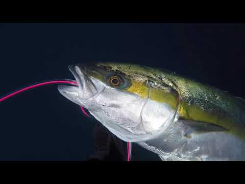 California Love! Spearfishing Santa Barbara Island